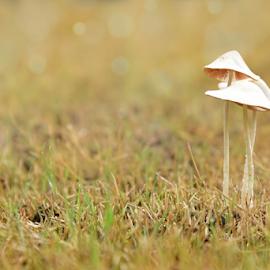 Mushroom family by Pradeep Krishnan - Nature Up Close Mushrooms & Fungi ( mushrooms, white mushroom, pradeep, beautiful mushroom, mushroom )