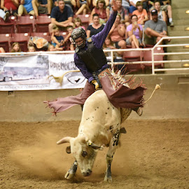 8 Second Ride by Givanni Mikel - Sports & Fitness Rodeo/Bull Riding ( cowboy, utah, riding, rodeo, bull )