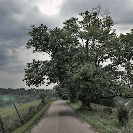 After the Storm by Jim Dawson - Novices Only Landscapes ( #kentucky #landscape #trees #ridge #nikonphotography )