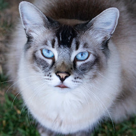 Bird eye portrait by Karoner Gaming - Animals - Cats Portraits ( amazing, beautiful, cats, cat, animal, animals, portrait, cute )