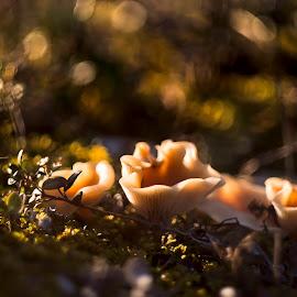 by Виталий Бирюков - Nature Up Close Mushrooms & Fungi