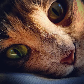 by John Ireland - Animals - Cats Portraits