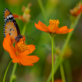 by Vyom Saxena - Novices Only Flowers & Plants
