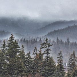In the Fog by Patricia Phillips - Landscapes Weather ( alaska fog weather )
