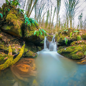 Pure Nature by Srdjan Vujmilovic - Nature Up Close Water ( water, waterfalls, tree, nature, green leaves, green, waterfall, nature up close, forest, leaf, landscape, leaves, river,  )