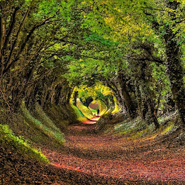 A Walk Through the Autumn Tunnel by Tim Clifton - Landscapes Forests ( autumn leaves, forest floor, trees, forest, autumn colors )