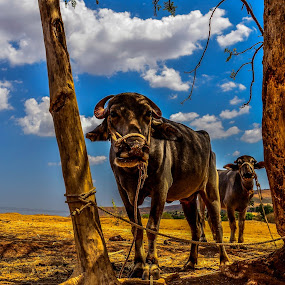Everythings is Beautiful by Milind Shirsat - Animals Other