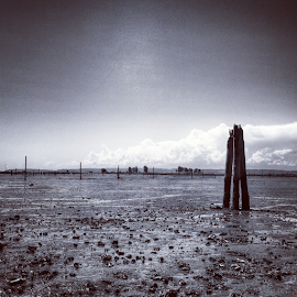 standing alone by Todd Reynolds - Instagram & Mobile Android