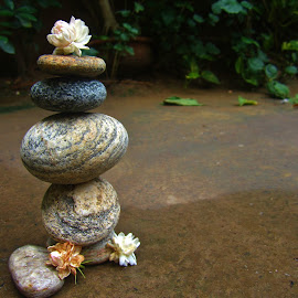 zen stones by Shreya Bansal - Novices Only Objects & Still Life ( water, nature, still life, outdoor, greenery, zen, backyard, flowers, stones )