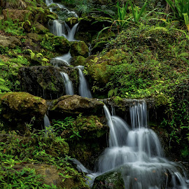 Cascading Stream by Robert Coffey - Landscapes Waterscapes ( water, stream, foliage, cascade, tropical, rocks )