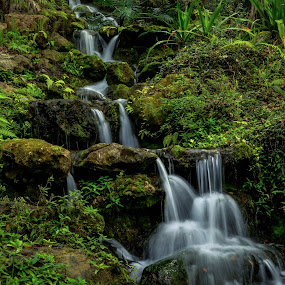 Cascading Stream by Robert Coffey - Landscapes Waterscapes ( water, stream, foliage, cascade, tropical, rocks,  )