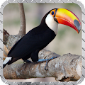 Toucan Wallpaper APK for Ubuntu
