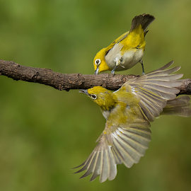 Fun Time by Jineesh Mallishery - Animals Birds