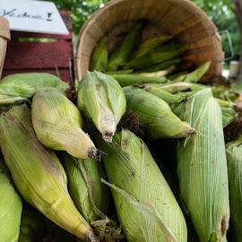 Corn by Donna Davis Kasubeck - Food & Drink Fruits & Vegetables (  )