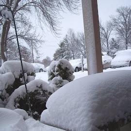 BRR!!! by Sandy Stevens Krassinger - Landscapes Weather ( cold, bushes, snow, white, trees, landscape, branches )