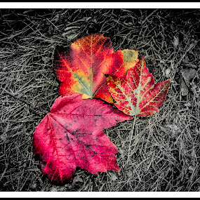 The Fallen by Michael Mounts - Nature Up Close Leaves & Grasses