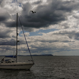 Boat Approaching Mudeford Harbour by Paul Milligan - Transportation Boats ( boating, sailing, seascape, transportation, boat )