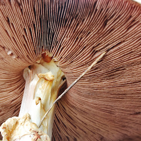Down under by Peg Elmore - Nature Up Close Mushrooms & Fungi ( mushroom, fungi, nature, underside, brown )