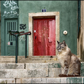 Lisbon colors by Carla Roque - Animals - Cats Portraits ( pose, cat, stairs, colors, lisbon, stray cat )