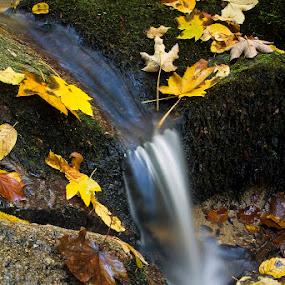 by Siniša Almaši - Nature Up Close Water ( water, up close, stream, nature, cascade, stone, rock, view, leaf, leaves, landscape, light, depth )