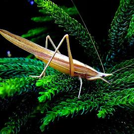 Grasshopper by Asif Bora - Instagram & Mobile Other