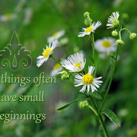 Begginings by Dipali S - Typography Captioned Photos ( illustration, motivation, daisy, type, decor, inspiration, calligraphy, card, place, template, wild, element, text, creative, letter, font, art, white, label, calligraphic, sign, poster, word, big, typography, small, letters, headline, graphic, decorative, captioned, title, words, quote, beginnings, inscription, note, banner, typographic, abstract, icon, decoration, advertisement, photo, message, motivational, typo, background, artistic, design )