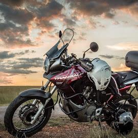 Transalp by Sunelle Schietekat - Transportation Motorcycles ( sunset, motorcycle, travel, road, transportation,  )