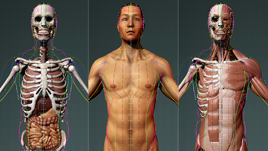 Visual Acupuncture 3D screenshot for Android