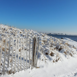 Snow Covered Beach Dune by Kristine Nicholas - Novices Only Landscapes ( water, sand, dunes, icy, grass, waterscape, dune, snowy, sea, fences, ocean, seascape, beach, landscape, grasses, fencing, fence, winter, cold, sand dunes, ice, snow, reservation, waterway )