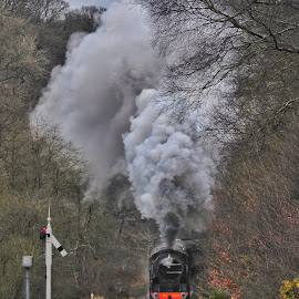 Puffa train by Sue Walker - Transportation Trains ( nym railway, goathland, steam train, atmospheric, steam,  )
