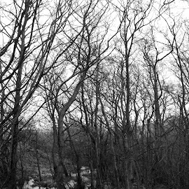 The Trees of Odin Stitch by DJ Cockburn - Nature Up Close Trees & Bushes ( water, countryside, stream, uk, monochrome, black and white, castleton, odin stitch, odin mine, landscape, rural, grayscale, pennines, england, winter, nature, tree, wetland, peak district, derbyshire, river, britain )