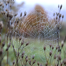 by OL JA - Nature Up Close Webs