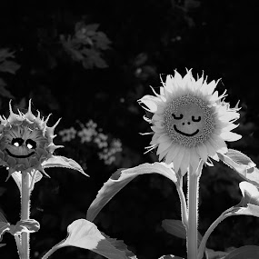 Put a smile on your dial by Carolyn Lawson - Black & White Flowers & Plants
