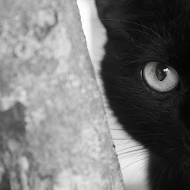 Know Me Not by Visakha Marla - Animals - Cats Portraits ( cat, black_white )