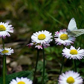 by Gabriela Gabriella - Flowers Flower Gardens (  )