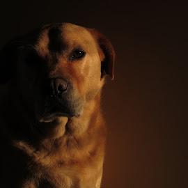 Biscuit by Noëlle Brown - Animals - Dogs Portraits ( love, happy, dog portrait, deep, biscuit )