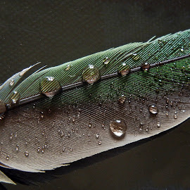 Feather by Pradeep Kumar - Artistic Objects Still Life
