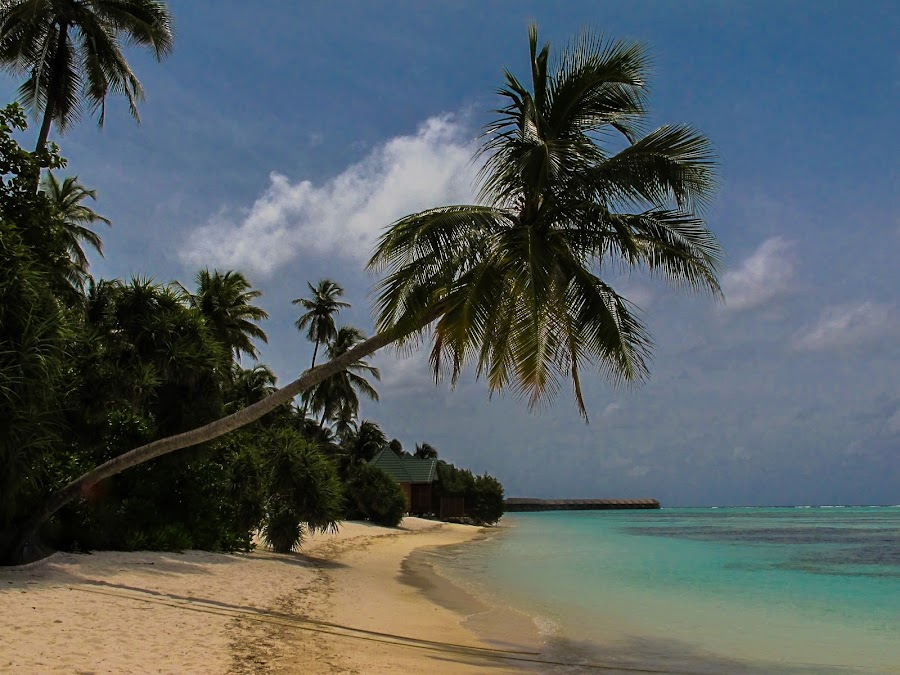 Beach by Rick McEvoy - Landscapes Beaches ( sanf, blue sky, tree, rick mcevoy, landdscape, beach, maldives )