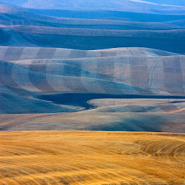 Gold and blue hills by Gale Perry - Landscapes Prairies, Meadows & Fields (  )