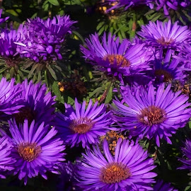 by Nicolaie Subotin - Flowers Flower Gardens