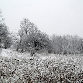 by Jean Snedeker - Landscapes Weather