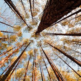 by Steven C. Bloom - Landscapes Forests