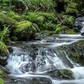 Hidden treasure by Sarah Ivanhoe - Landscapes Waterscapes ( mystic, water, stream, forrest, green, flowing water, moss, trees, creak, rocks, ferns, river )