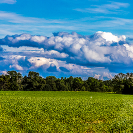 Thomas County by Kenneth Anderson - Landscapes Prairies, Meadows & Fields ( field, clouds, sky, thomas county )
