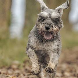 whoooooo by Michael  M Sweeney - Animals - Dogs Playing ( dog playing, dog, running )