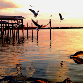 Dock and Gulls by Blake Coln - Animals Birds