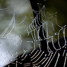 Spider's labyrinth  by Pradeep Kumar - Nature Up Close Webs