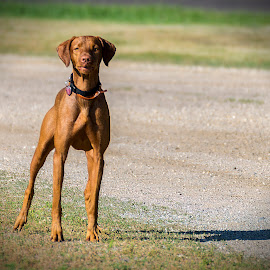 Don't Take That Picture! by LINDA HALLAUER - Animals - Dogs Portraits
