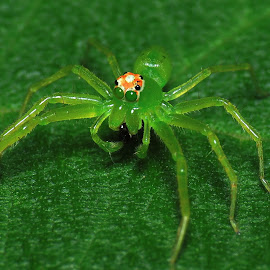 by Wan Cini - Animals Insects & Spiders