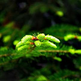 by Ioan Trifu - Nature Up Close Trees & Bushes